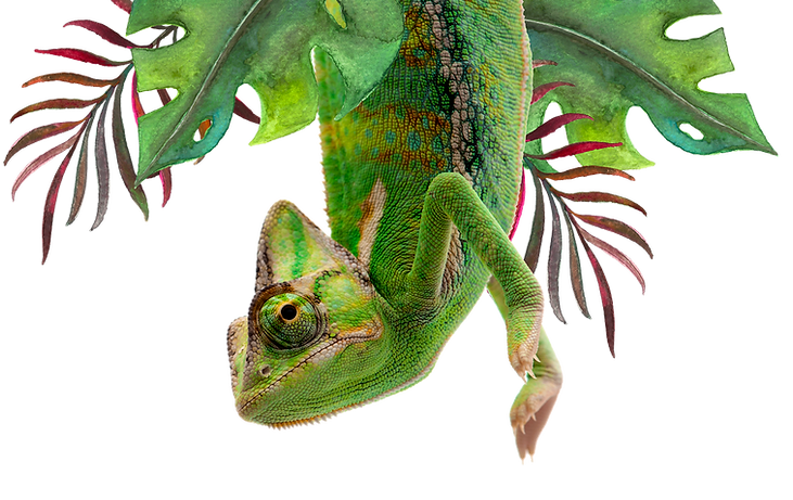 Chameleon-1.png