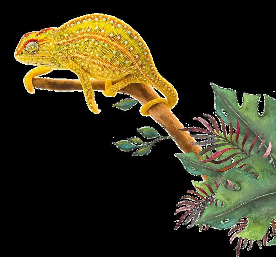 Chameleon-7.png