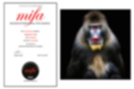 MIFA - Prix H - Mandrill.jpg