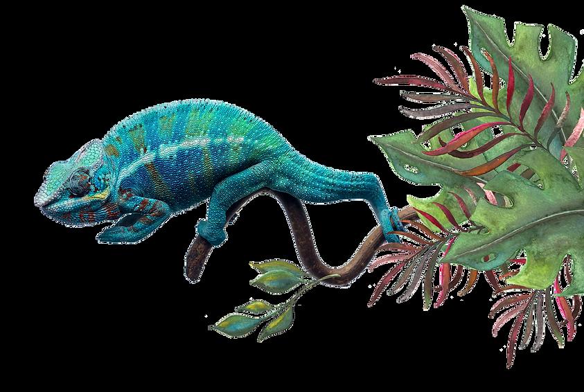Chameleon-5.png