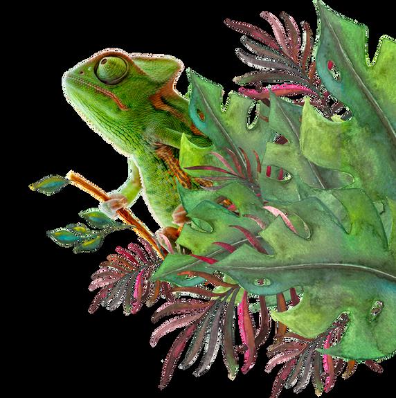 Chameleon-3.png