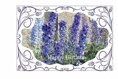 Birthday Lupins