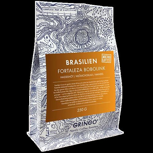 Brasilien Fortaleza Bobolink