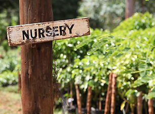 Kenya_nursery.jpg