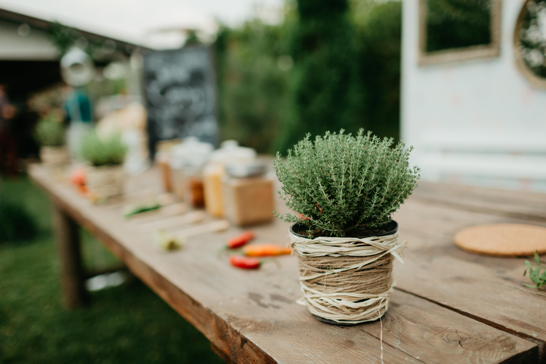 plante pentru live cooking