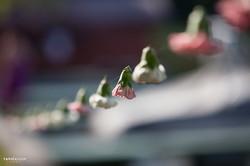 șirag de flori