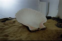 shell 10051