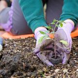 איך לשתול שיחים בגינה