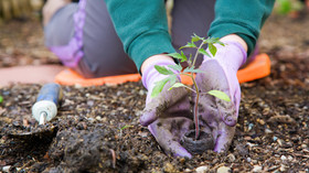 How to Plant - Trees, Shrubs and Roses