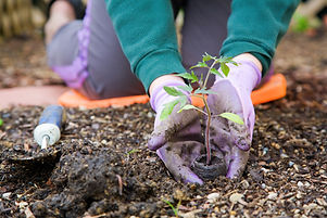 Aanplant schaduwrijke planten
