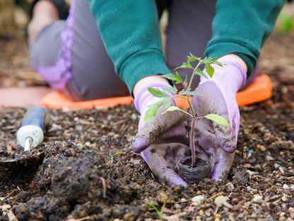 Permacultura: Cambiando la Forma en que Cultivamos La Tierra
