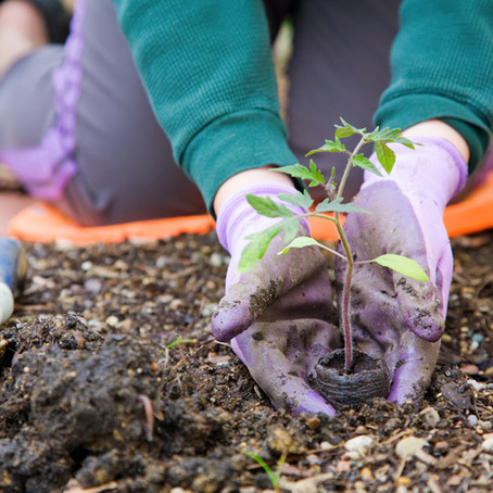 How Your Yard Can Help Restore Our Ecosystem