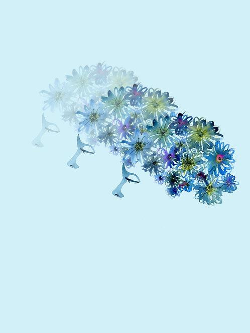 A Beautiful Mind - Blue