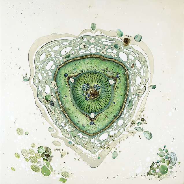 Délicate diatomée.jpg