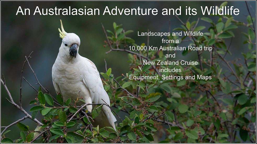 Australasian.jpg