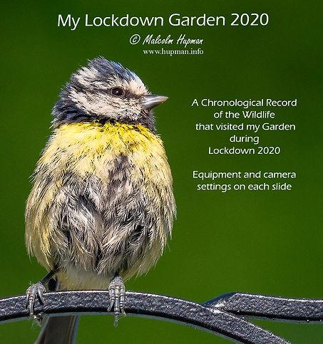 My Lockdown Garden.jpg