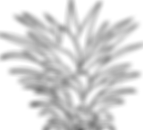pineapple-2881250_960_720_edited.png