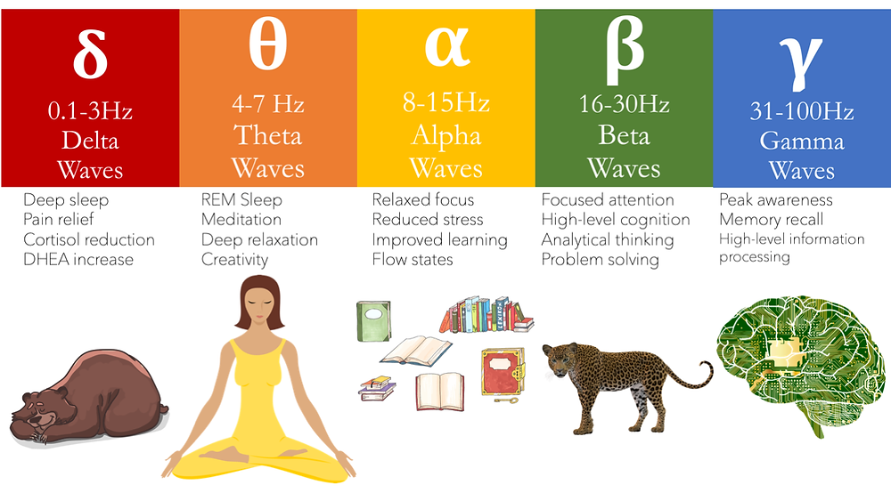 Brainwave spectrum, Delta wave, deep sleep; Theta wave, meditation; Alpha wave, learning, Flow; Beta waves, focused attention; Gamma waves, information processing. Electroencephalograhphy and meditation teaching provied by Pandey Integrated Healthcare. Harley Street. London. Director. Dr Vikas Pandey