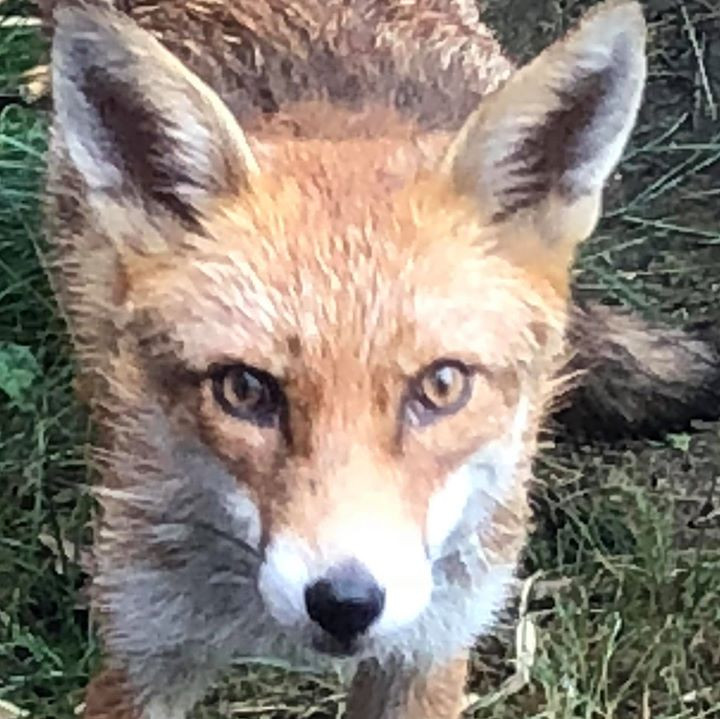 Despoina Chatzimichalaki, Foxy