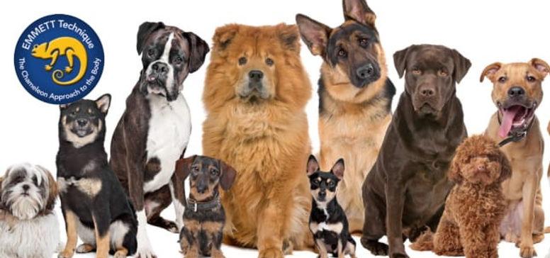 E4D  Just dogs.jpg