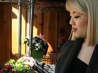 Lauren Lee's 'Posey' blooms