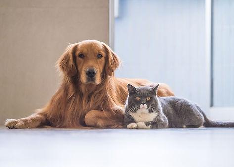 Pets .jpg