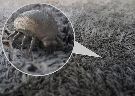 Dust Mites.jpeg