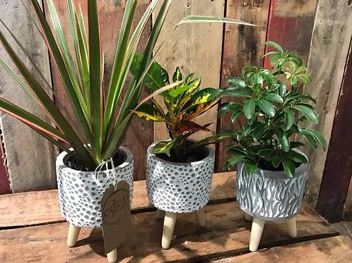 Concrete Patterned Pot and Plant