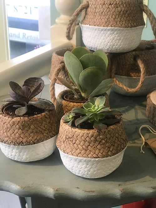 Ceramic Rope Pot