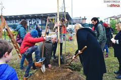 Nuovi alberi e nuova vita: all'Arcella prende forma il Totem park