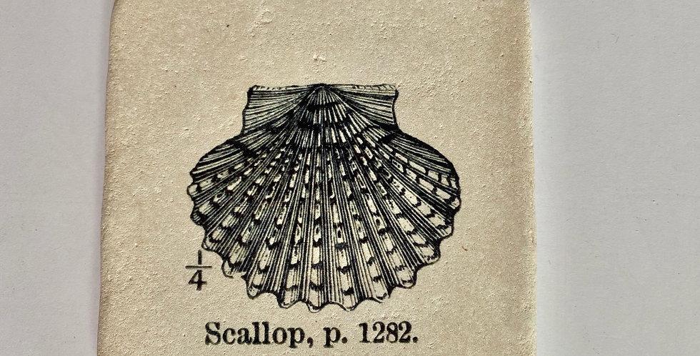 Scallop Coaster