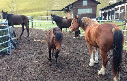 Pferde02_19-04.jpg