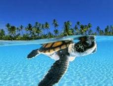 Xcacel.sea-turtle-300x160.jpg
