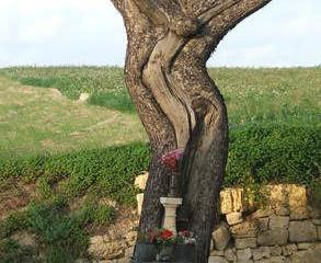 Мифы и легенды Мальты: Воскрешение Дерева-распятия