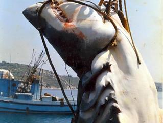 Мифы и легенды Мальты: белая акула с сапогом внутри