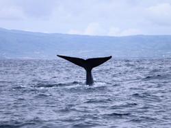Baleia 3