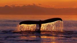 Avvistate gruppi di balene felici a Cittadella ...