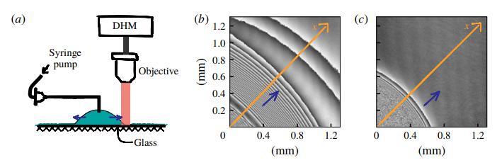 (a)観察概略図 (b)Ca=0.0125の時の波紋 (c)Ca=0.3562の時の波紋(Cambridge CORE HPより)