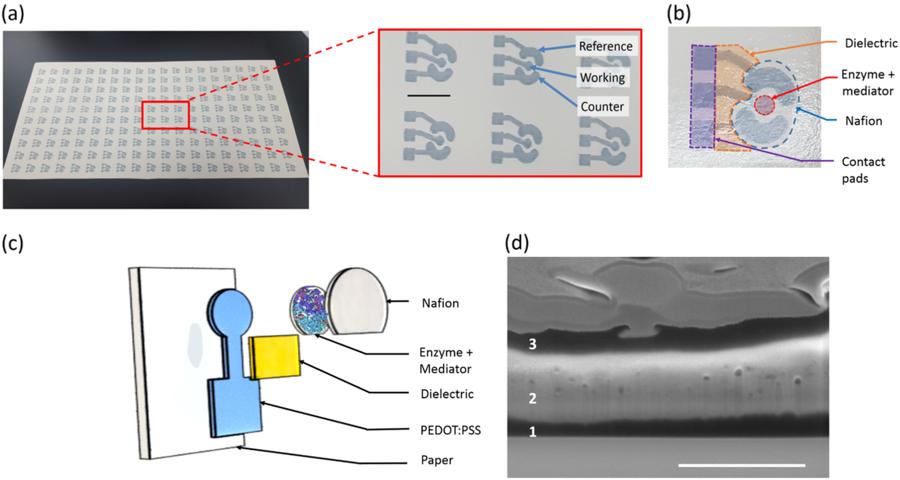 (a)グルコースバイオセンサの写真、(b)完全に印刷されたバイオセンサーの写真、(c)別々に印刷層の分解図(d)FIBを使用して撮影した作用電極の断面SEM像。PEDOT:PSS(1)、生物学的コーティング(2)、および封入層(3)を紙上に垂直に組み立て。(a)と(d)のスケールバーは、それぞれ1 cmと1 µm (npj Flexible Electronics HPより)