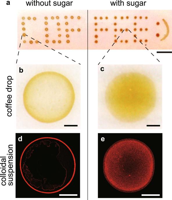 (a)コーヒーの明視野像、左側:砂糖なし、右側:200mMの砂糖を含む、スケールバーは1 cm、(b、c)拡大画像、スケールバー500μm、(d、e)コロイド滴の最終的な堆積の共焦点画像、(d)砂糖なし、(e)スクロース200mM スケールバー500μm  (Scientific Reports HPより)