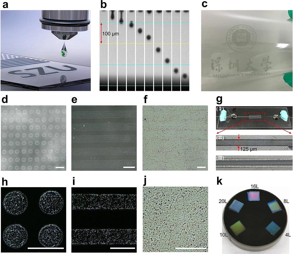 a.インクジェット印刷の概略図、b.吐出過程のストロボ画像、c.PETフィルムに印刷したロゴ、d – fおよびh – jガラス基板上に印刷されたドット、ストライプ、およびプレーン、スケールバー:100μm、g(I)サイドポリッシュドファイバー可飽和吸収体。(II)印刷(12層)および(III)光学顕微鏡で確認した印刷されていない側面研磨繊維。kインクジェット印刷されたMXene可飽和吸収体ミラー(npj 2D Materials and Applications HPより)