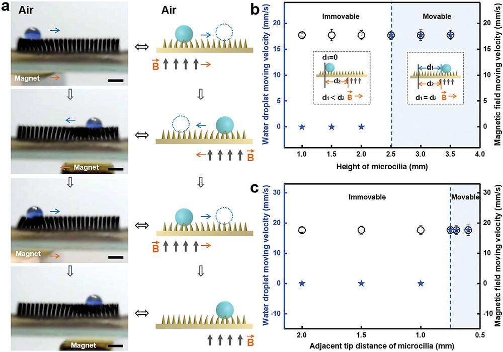 磁気応答性超疎水性MMA表面上の水滴の水平運動特性 a)液滴輸送プロセスの光学画像と概略図、b)超疎水性磁性微繊毛アレイの高さ(H)が、水滴(V 液滴 = 12 µL)の可動性に及ぼす影響、c)水滴の可動性に対する微繊毛の隣接先端距離の影響  (Wiley Online Livrary HPより)