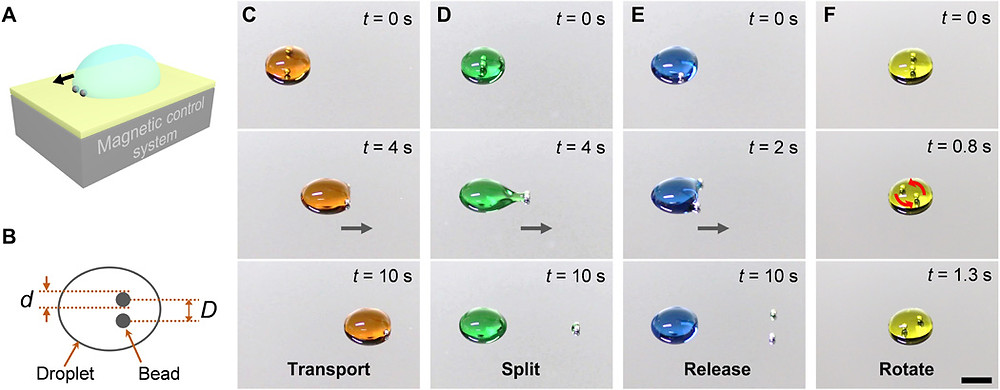 (A)液滴操作原理図(B)磁気駆動ロボットを記述するパラメーター(C~F)ロボットによって操作される液滴の典型的な動作 スケールバー5mm(Science Advance HPより)
