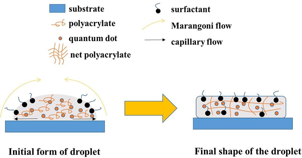 乾燥過程の概略図(Journal of Information Display より)