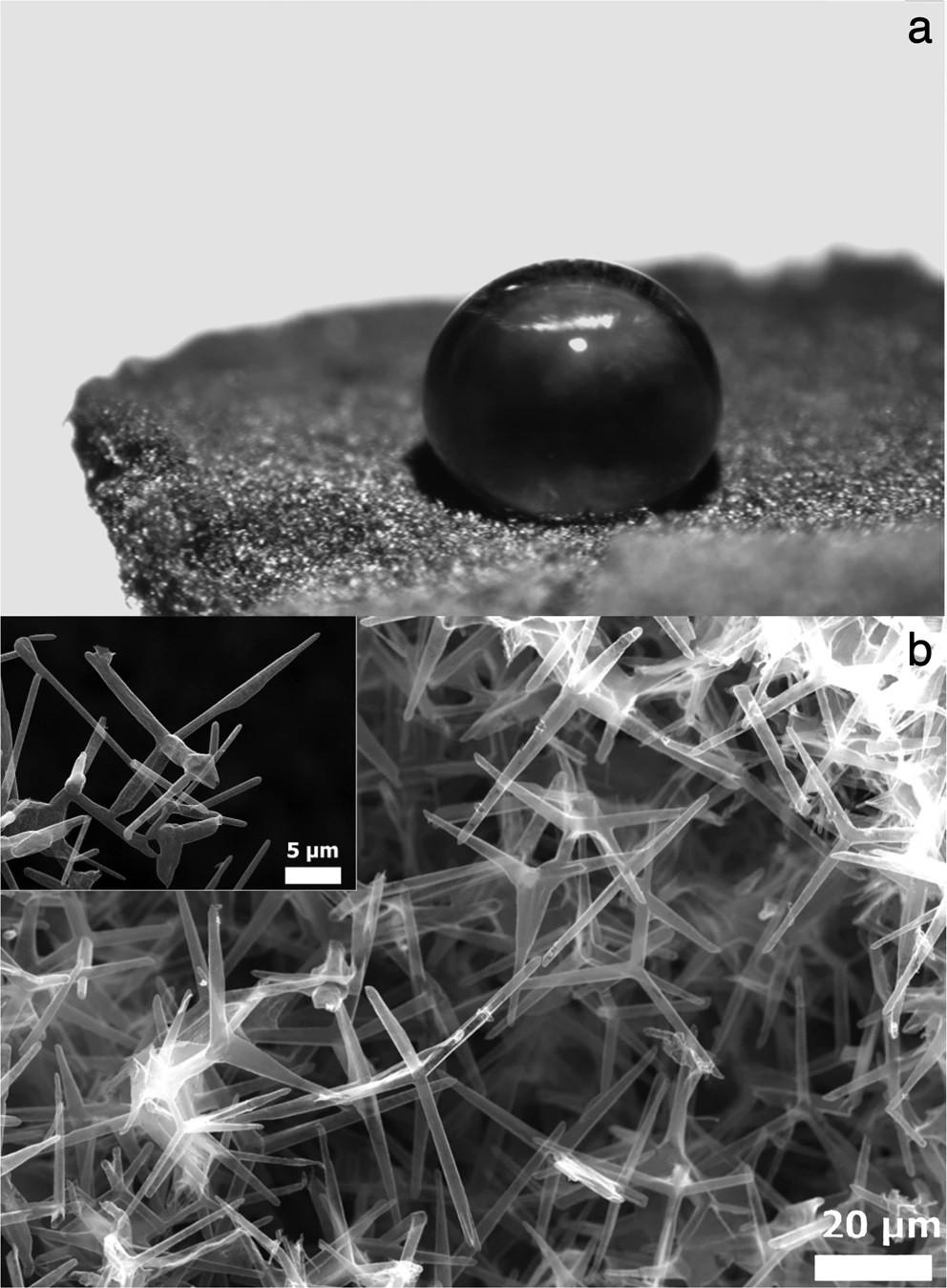 エアログラフェンエアロゲルの形態。(a)、疎水性エアログラフェンエアロゲル上にキャストされた水滴の画像。(b)、Aerographeneエアロゲル表面の代表的なSEM顕微鏡写真。挿入図、カーボンテトラポッドの詳細。(Scientific Reports より)