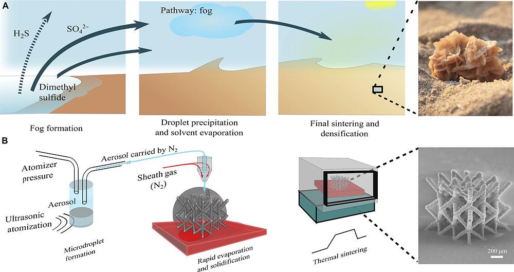 図1 デザートローズの自然な成長と、マイクロアーキテクチャを実現するためのポイントワイズ印刷によるナノ粒子の3D蓄積の類似性(Science advances HPより)