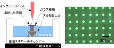 細胞凍結概略図とマトリクス状に配置した印刷結果(信州大学HPより)
