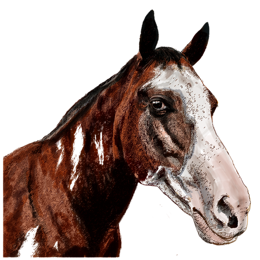horse-1-png.png