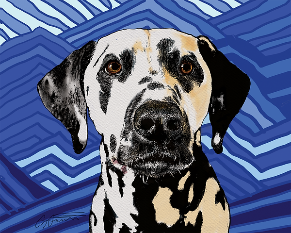 Pet portrait of Marbles the Dalmation