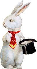 white rabbit.jpg